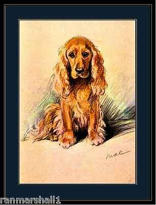 English Picture Print  Golden Cocker Spaniel Dog Art