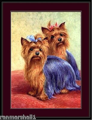 English Picture Print Yorkshire Terrier Dog Duo Art