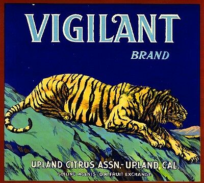 Upland Vigilant Tiger Orange Citrus Fruit Crate Label Art Print