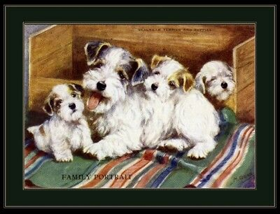 English Picture Print Sealyham Terrier Dog Puppies Art