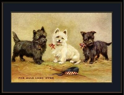 English Picture West Highland Cairn Terrier Dog Dogs Puppy Puppies Vintage Art