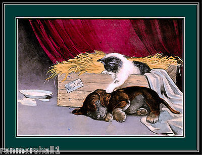 English Picture Print Dachshund Puppy Dog Kitten Cat Dogs Cats Puppies Poster
