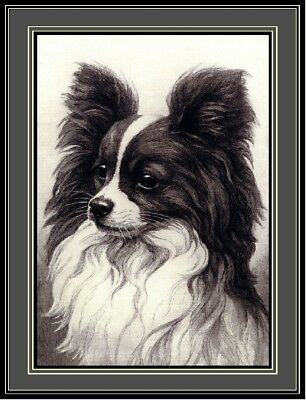 English Picture Print Papillon Puppy Dog Dogs Puppies Vintage Poster Art