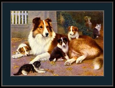 English Print Collie Dog Puppy Cat Kitten Art Picture Poster