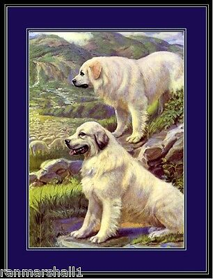 English Print Great Pyrenees Dog Dogs Puppy Puppies  Art Vintage Poster