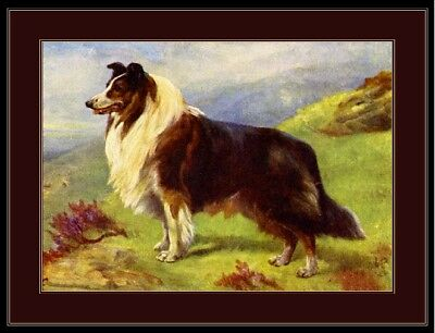 English Picture Print Scotch Collie Shepherd Dog Art
