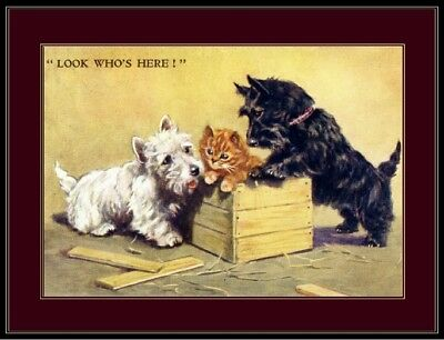 Print West Highland Scottish Terrier Dog Cat Picture