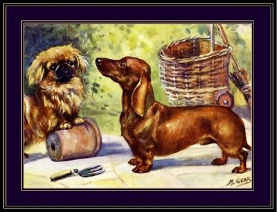English Picture Print Pekingese Dachshund Puppy Dog Dogs Puppies Poster Art