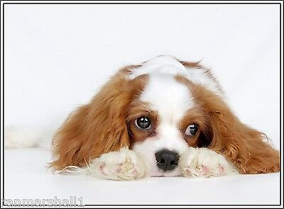 Set of 4 Dog Puppy Cavalier King Charles Spaniel Greeting Notecards/ Envelopes