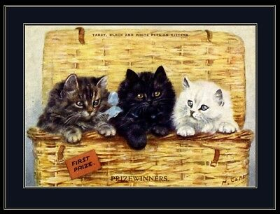 English Picture Tabby Persian Kitten Cat Art Print