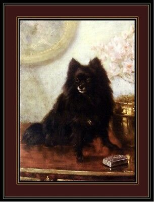 English Print Black Pomeranian Puppy Dog Dogs Puppies Vintage Poster Art Picture
