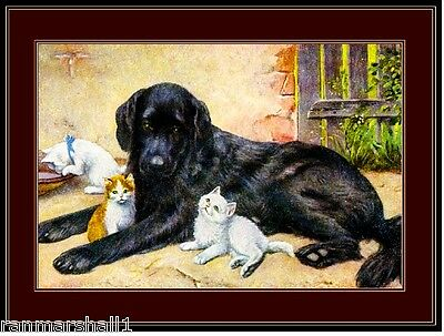 English Picture Print Labrador Retriever Dog Dogs Kitten Cat Cats Poster Art