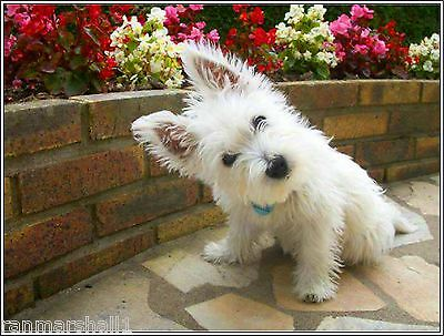 4 Dog West Highland Terrier Puppy #6 dogs puppies Notecards/ Envelopes