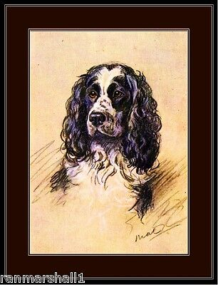 English Print English Springer Spaniel Dog Art Picture