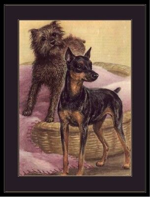 Picture Miniature Pinscher Brussels Griffon Dog Print