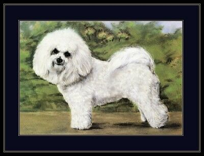 English Picture Print Bichon Frise Puppy Dog Dogs Puppies Vintage Poster Art