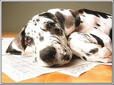 4 Dog Great Dane Puppy Greeting Notecards/ Envelopes