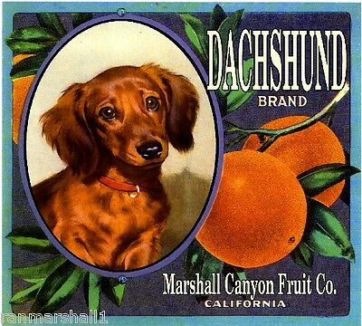Marshall Canyon Dachshund Puppy Dog Orange Citrus Fruit Crate Label Art Print