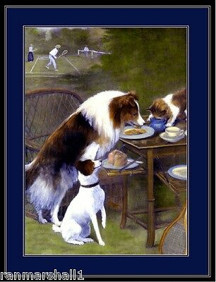Print Collie Puppy Dog Dogs Jack Russell Terrier Cat Art Picture Vintage Poster