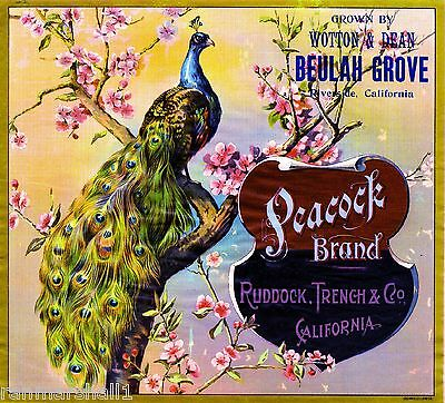 Riverside Peacock #1 Orange Citrus Fruit Crate Label Art Print