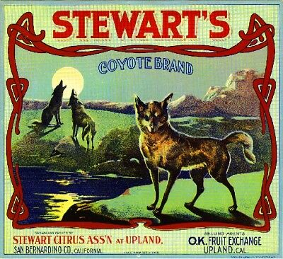 Upland Stewart's Coyote Orange Citrus Fruit Crate Label Art Print