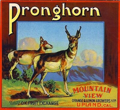 Upland San Bernardino Pronghorn Deer Orange Citrus Fruit Crate Label Art Print