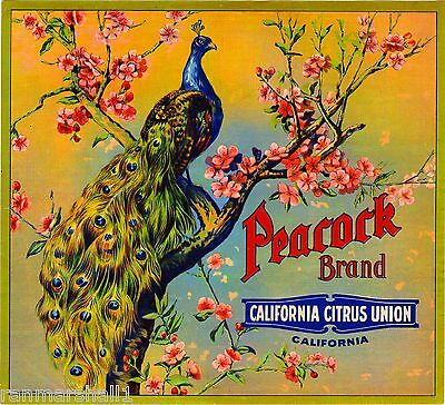 Riverside Peacock Bird Orange Citrus Fruit Crate Label Vintage Art Print