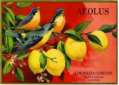 Santa Paula Aeolus Bluebirds Lemon Citrus Crate Box Label Art Print