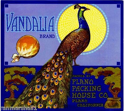 Plano Vandalia Peacock Bird Orange Citrus Fruit Crate Label Art Print