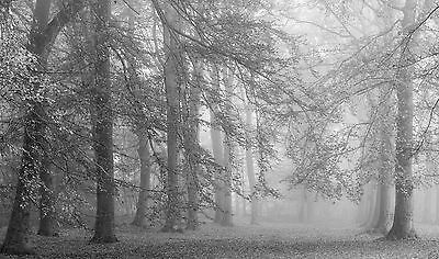 Autumn is Here-Wall Mural-13.5'wide by 8'high-Black & White