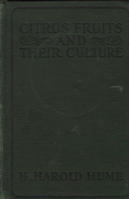 H. Harold Hume CITRUS FRUITS AND THEIR CULTURE 1909 HC Book