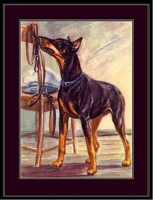 English Print Doberman Pinscher Puppy Dog Puppies Dogs Poster Art Picture