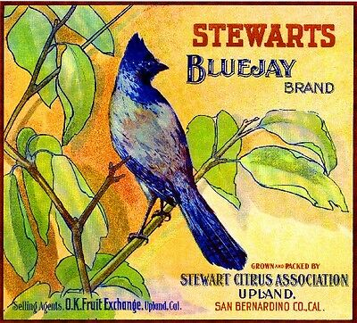 Upland Stewarts Blue Jay Orange Citrus Fruit Crate Label Art Print