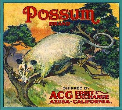 Azusa Los Angeles California Possum Orange Citrus Fruit Crate Label Art Print
