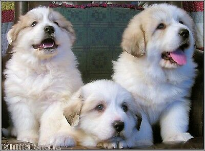 4Pack Dog Great Pyrenees Puppy Stationery Notecards Greeting Notecard/ Envelopes