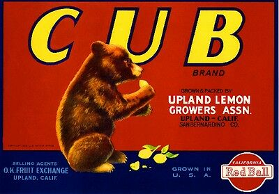 Upland California Bear Cub #3 Lemon Citrus Fruit Crate Label Vintage Art Print