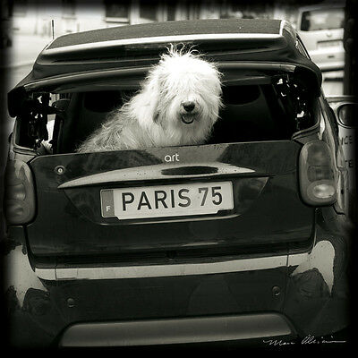 Paris Dog I Art Poster Print by Marc Olivier, 12x12