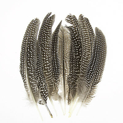 100pcs Beautiful Guinea fowl wing feather 6-8inches 15-22cm free shipping