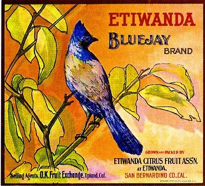 Etiwanda Upland San Bernardino BlueJay Orange Citrus Fruit Crate Label Art Print