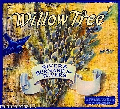 Los Angeles California Willow Tree Bluebird Bird Apple Fruit Crate Label Print