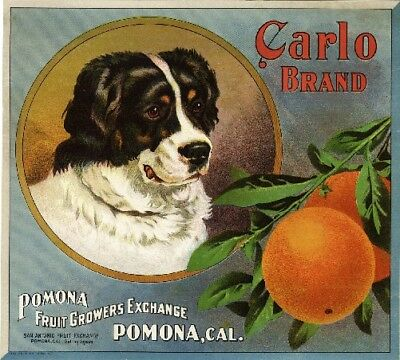 Pomona Carlo Bernese Mountain Dog Orange Citrus Fruit Crate Label Art Print