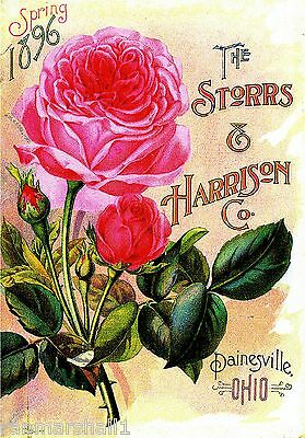 1896 Spring Roses Vintage Flowers Seed Packet Catalogue Advertisement Poster
