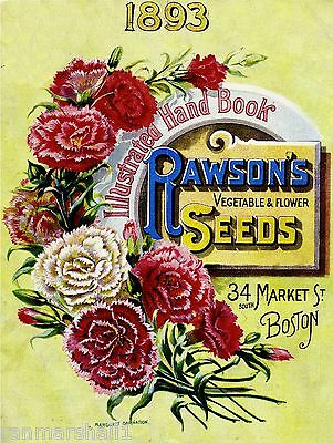 1893 Rawson Carnation Vintage Flower Seed Packet Catalogue Advertisement Poster