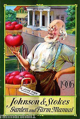 1906 Johnson Tomato Vintage Flowers Seed Packet Catalogue Advertisement Poster