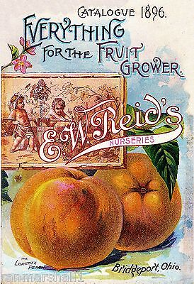 1896 Reid's - Peach Vintage Flowers Seed Packet Catalogue Advertisement Poster