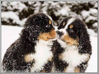 4 Set Dog Bernese Mountain Dog Puppy Puppies Dogs Greeting Notecards/ Envelopes