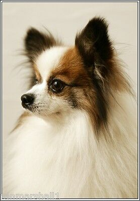 Set of 4 Puppy Dog Papillon Stationery Greeting Notecards / Envelopes