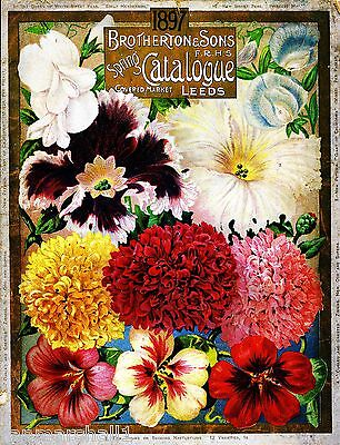 1897 - Brotherton Vintage Flowers Seed Packet Catalogue Advertisement Poster