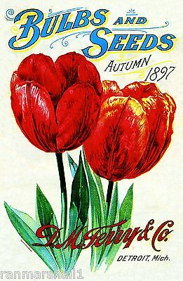 1897 Ferry Tulips Vintage Flowers Seed Packet Catalogue Advertisement Poster
