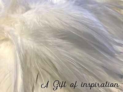 Pack of 20 White rooster feathers 9-15cm for craft/millinery/fly fishing